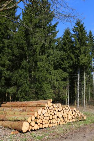 wood cut: cut wood