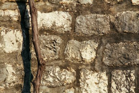 Background and texture of stone wall with dry trunk.
