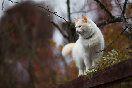 White fluffy cat standing relaxed on the wooden crate in bright november day. Adorable autumn bokeh. Cottagecore aesthetics, rural and everyday life concept. Copy space