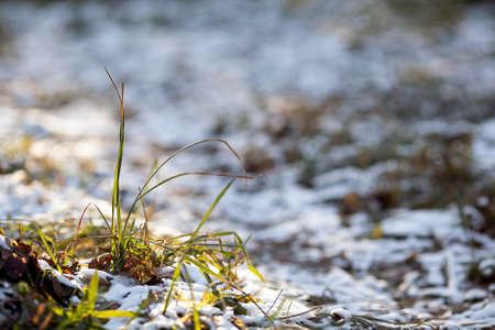 First snow in december forest. Green grass, white snow and sun, early morning. Adorable bokeh, copy space