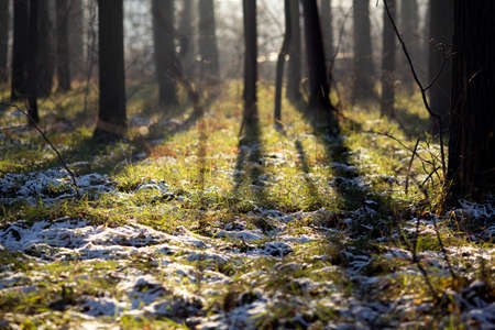 First snow in the forest. Green grass, white snow and morning sunlight. Idyllic december scenery