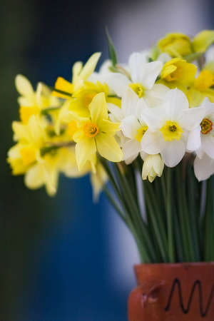 Bouquet of spring daffodils in a fceramic vase. White and yellow jonquils are standing outside. Spring and easter symbol. Vertical format