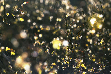 Yellow spring flowers on the bush with adorable bokeh. Yellow and green background. Sun light