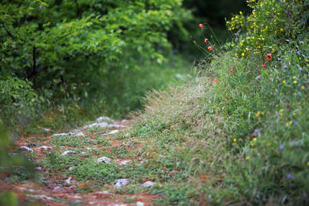Path in the wild. Poppy flowers, green grass and stones. Natural way, spring. Cremea, may