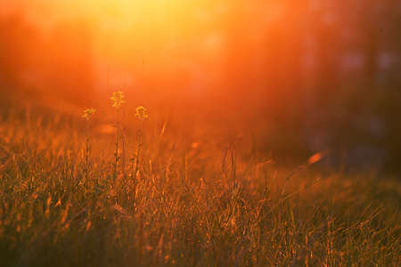 Sunset. Grass and flowers in bright warm rear light. Copy space. Spring, may, Cremea Banco de Imagens