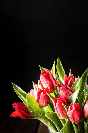 Closeup red tulips flowers bouquet and green leaves on black background. Zdjęcie Seryjne