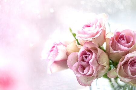 Group of pale pink roses with water drops, holiday background, mother's day, march 8, greeting card. copy space