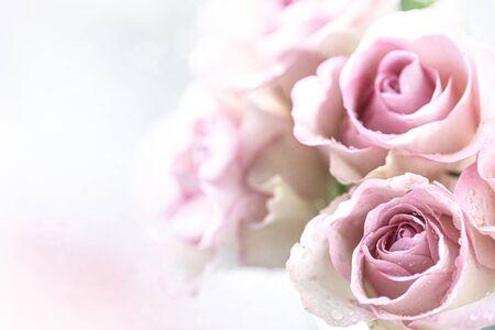 一组组淡粉色玫瑰带水珠,节日背景,母亲节,3月8日,贺卡。本空间