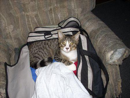 duffle: Kitty Baggage