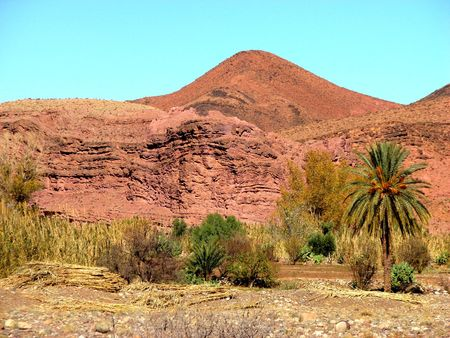 marocco: mountain and palm tree in south Marocco