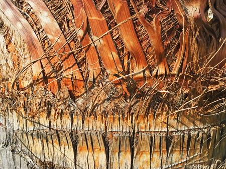 bark palm tree: Bark of a Palm Tree