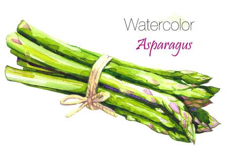 수채화 신선한 그린 아스파라거스입니다. 흰색 배경에 고립 된 에코 음식 그림입니다. 식품 클립 아트입니다. 그린 된 수채화 그림 건강 한 채식 음식