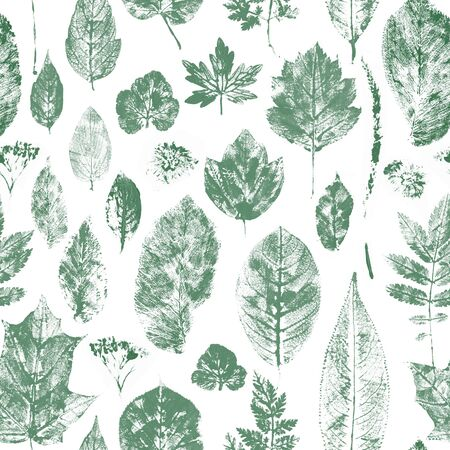 Many leaves stamps scattered on white background. Natural autumn, fall pattern. Standard-Bild