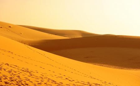Sand Dunes at Sunrise  photo
