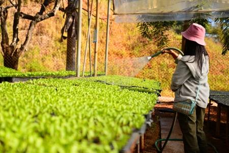 Hydroponics Vegetables Stock Photo
