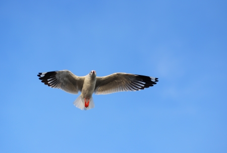 baptize: Flying Seagull in Blue Sky