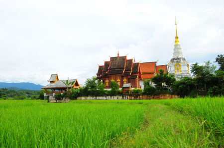 Paddy Rice Fields with Temple