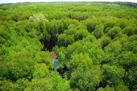 wetland conservation: Top View of Mangrove Forest Stock Photo