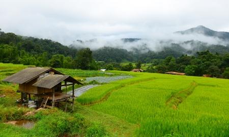 Farmer Bamboo Hut at Rice Fields