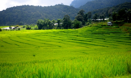 Terraced Rice Fields on the Mountain