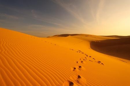 Sand Pattern on Sand Dunes Stock Photo - 23324833