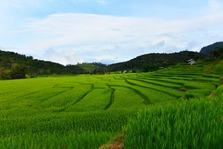 Terraced Rice Fields photo