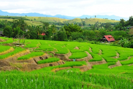 Terraced Rice Fields photo