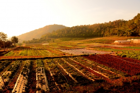 Agriculture Fields in Rural Village  photo