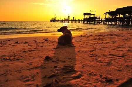 Lonely Dog on Sunrise Beach photo
