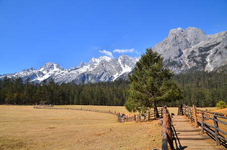 Meadow on Alpine Mountain photo