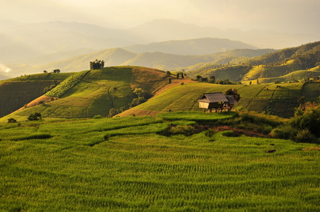 Rice Paddy Fields Landscape photo