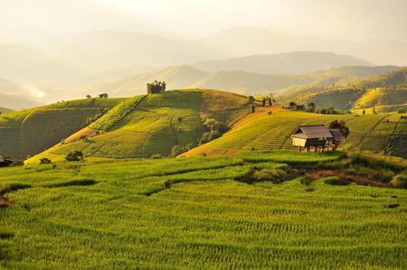 Rice Paddy Fields Landscape photo
