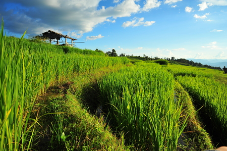 Rice Terraced Fields photo