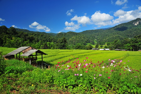 Rice Paddy Fields on the Hills photo