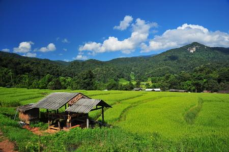 Rice Terraced Fields photo