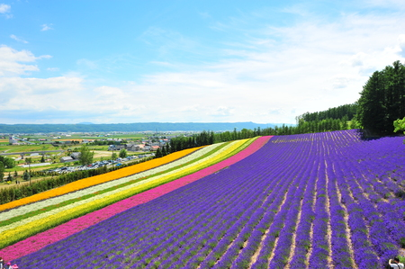 Colorful Flower Fields in Japan
