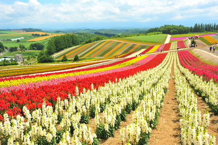 biei: Colorful Flower Fields in Japan