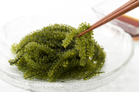 strands: UMIBUDOU Sea grape seaweed