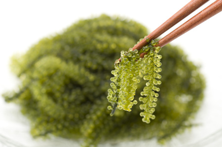 UMIBUDOU Sea grape seaweed