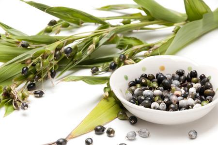 Jobs tears (coix lachryma-jobi) of wild grass closeup on white background