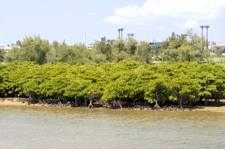 downstream: Okukubi River Mangrove forest,