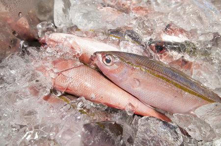 bananafish, double-lined fusilier, Takasago, a kind of sea fish, is called gurukun in the Okinawa dialect.