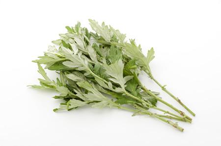 ajenjo: Fresh green mugwort leaves on a white background.