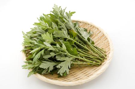Artemisia giapponese Archivio Fotografico - 92147853