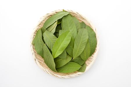 guava leaf Archivio Fotografico - 95877719