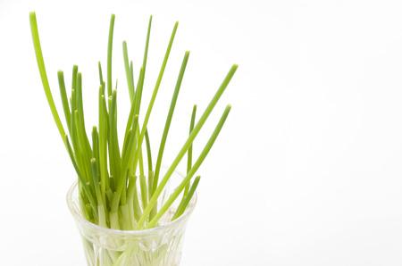 Egeneated vegetables reborn vegetable carrot Stock Photo