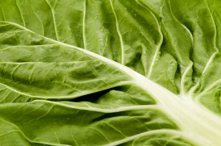 Green swigs chard closeup Stock Photo