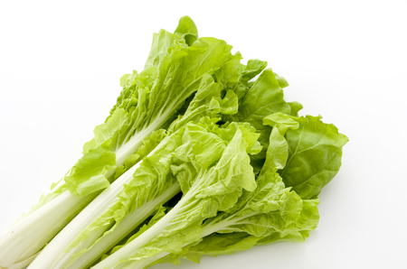 Shantung vegetables, a genus of Chinese cabbage called santou-na