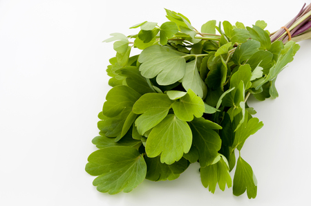 choumeisou, herb, Peucedanum japonicum background