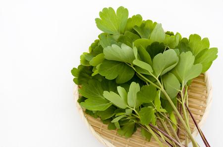 choumeisou, herb, Peucedanum japonicum background